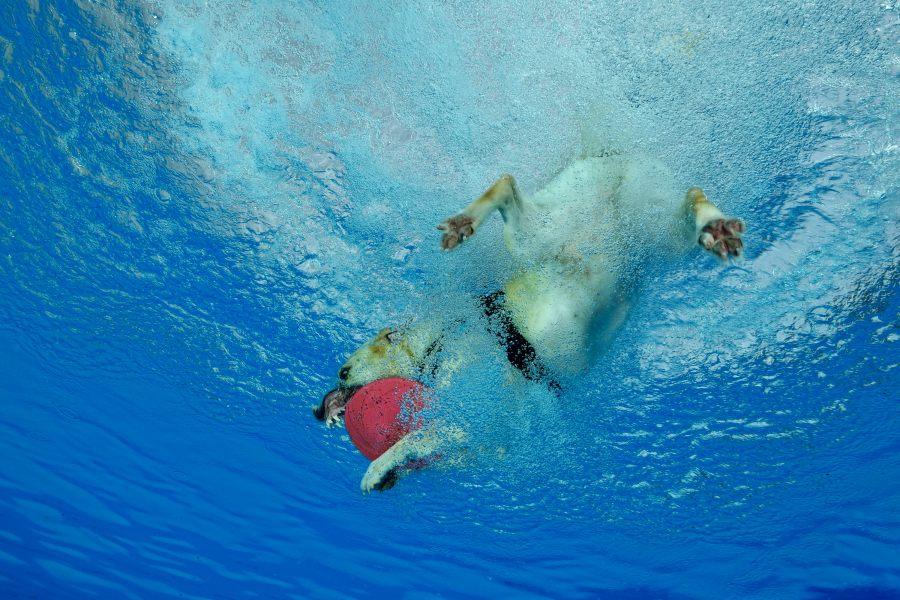 Hundeschwimmen3