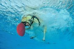 Hundeschwimmen4