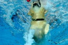 Hundeschwimmen5