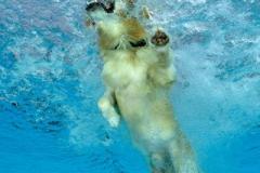 Hundeschwimmen6
