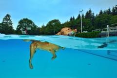Hundeschwimmen7